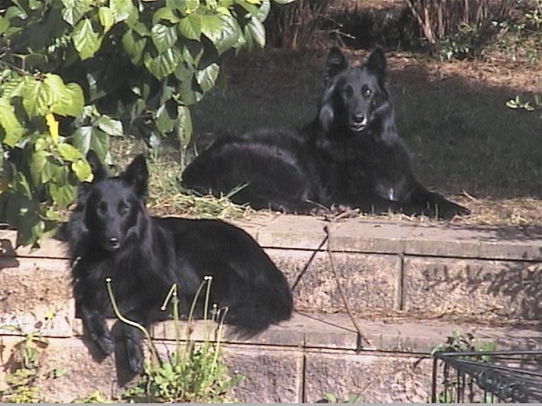 Pictured here are Jeddah & Hera, enjoying the morning sunshine at Beljekali ^..^
