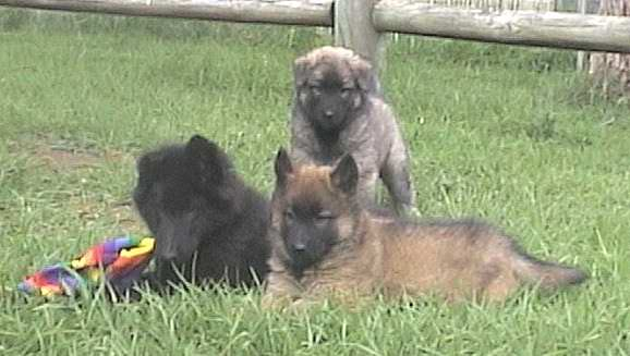 Me with my sister Schkali & cousin Jazz, the black one!