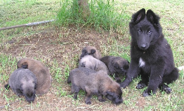 Misty with her half brothers & sisters - hurry up and get bigger so we can play!!!