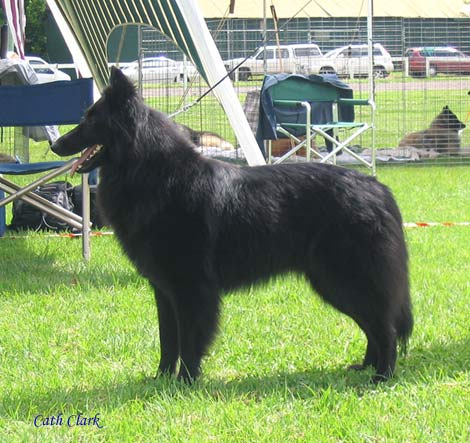 Misty at the Breed Specialty Oct 2006, 1st Exc, Res Female