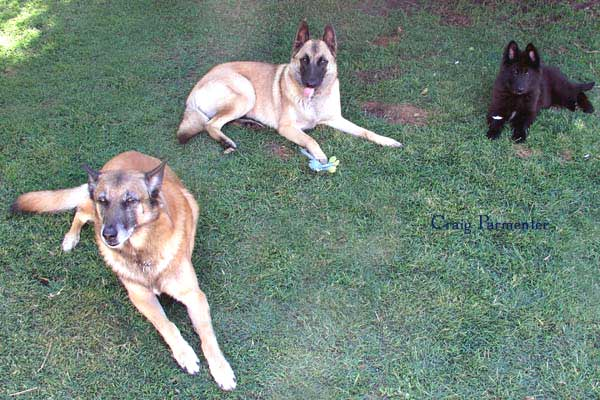 My 4-legged Family, Rimu, Keira & Me!