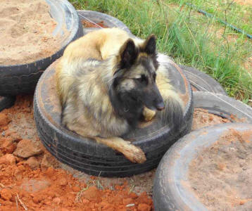I love these tyres - they're so comfy & clean? ;^)