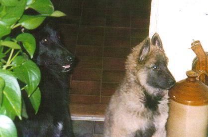 Hi I'm Schkali on the right! ^..^