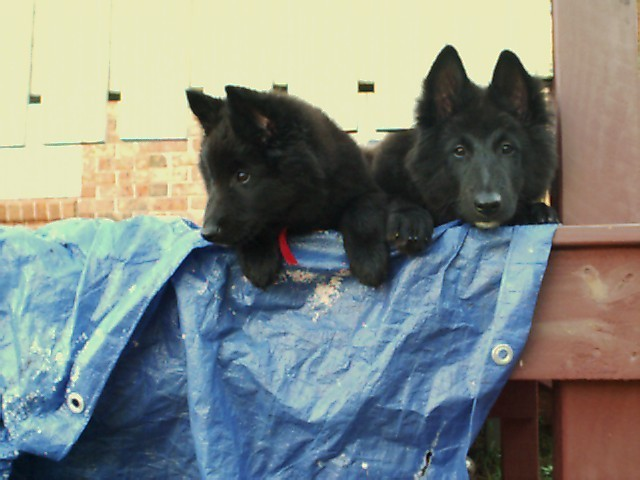 I'm Storm - on the left!  My bro, Shadow, next to me.